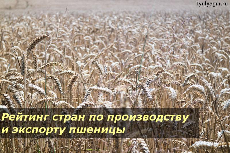 Страны лидеры в мире по производству и экспорту пшеницы