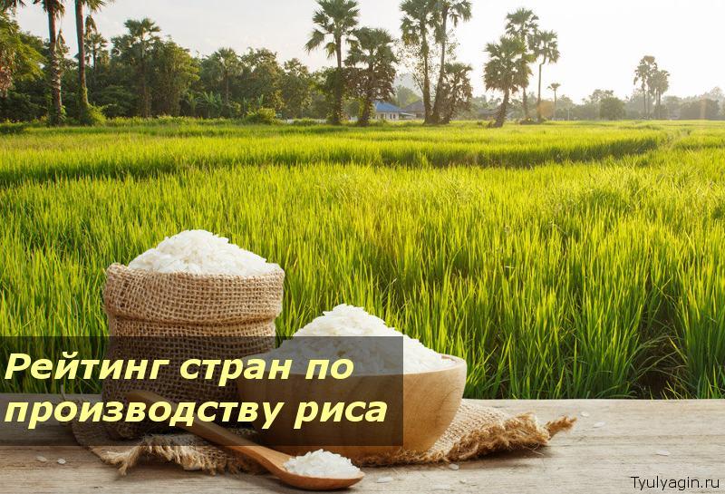 Рейтинг стран лидеров мира по производству и экспорту риса