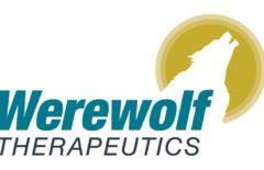 IPO Werewolf Therapeutics Inc. на 100 млн долларов: обзор компании и финансовые показатели